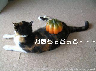 かぼちゃにもプライドがあるようです。