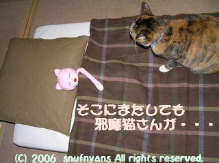 そこに邪魔猫が・・・