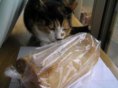 パンのなかはらのオニオンパン