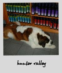 hunterdog.jpg