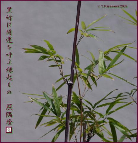 090102黒竹