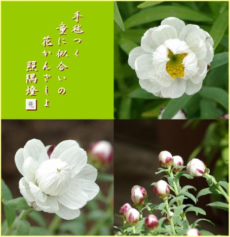 090216花かんざし