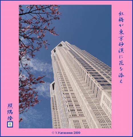 090315都庁と紅梅