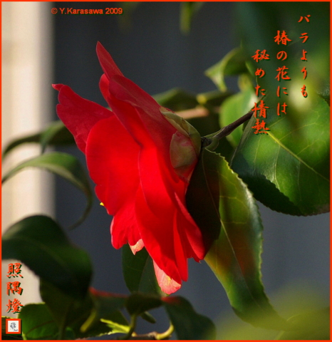 090324赤い椿