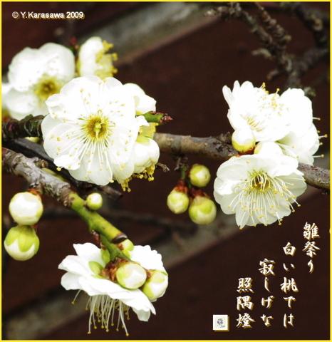 090303花桃