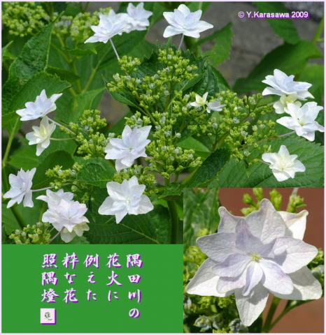 090616我が家の隅田川花火