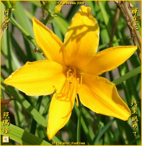 090728禅庭花