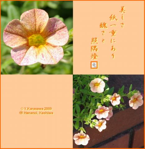090822ミリオンベル橙斑