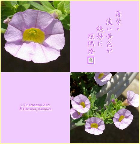 090824ミリオンベル薄紫