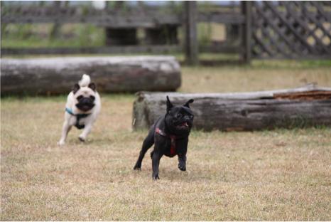 doggy14.jpg