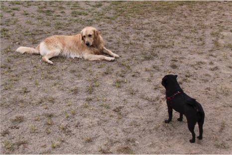 doggy17.jpg