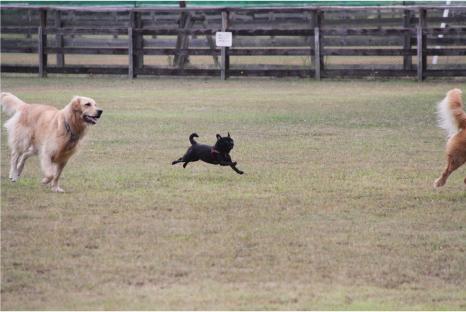 doggy20.jpg