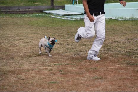 doggy3.jpg