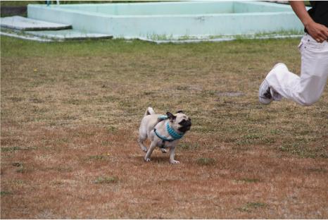 doggy5.jpg