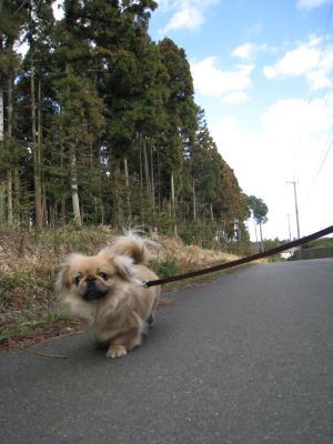 いつもと違う散歩道!