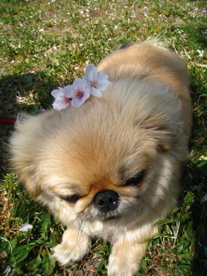 花の髪飾り。