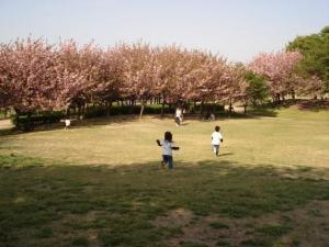 これって桜?