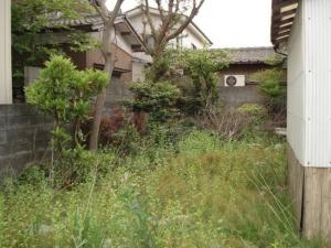 実家の庭2