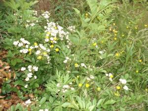 白と黄色ろの花