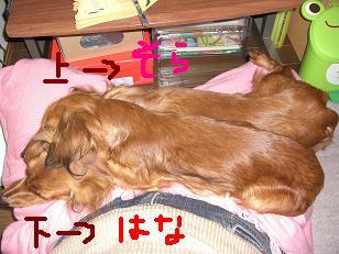 CIMG1332.jpg
