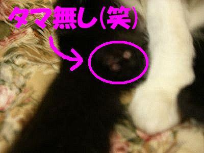 2007_0313_jiji_1.jpg