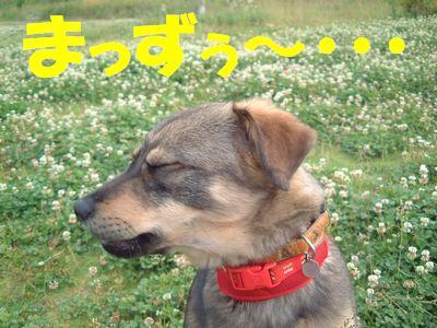 2007_0525_7.jpg