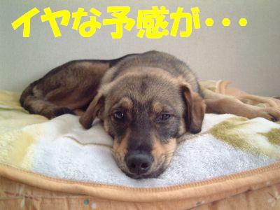 2007_0531_1.jpg