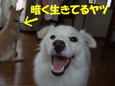 2007_0818_4.jpg