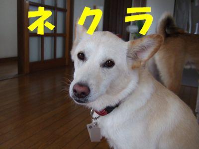 2007_0822_2.jpg