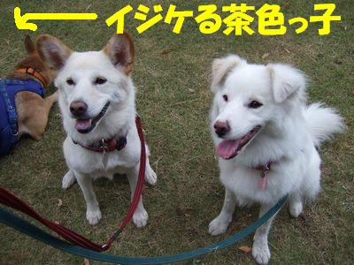 2007_0823_3.jpg