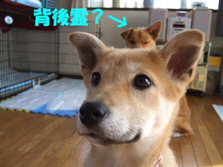 2008_0222_1.jpg