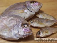 081025fish2