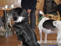 090104threedogs2