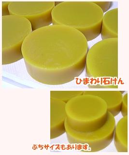 himawari0808_20081001200502.jpg