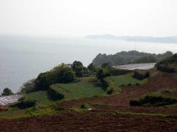 長島町段々畑