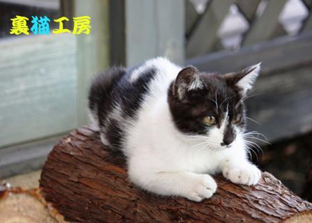 8月25日湯布院の子猫3のコピー