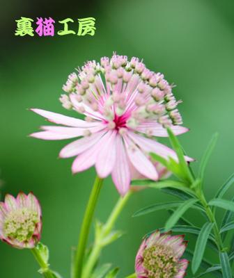 10月1日ピンク系の知らない花2のコピー