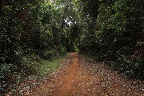 Dam briの森をゆく