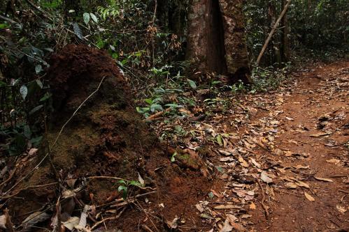 シロアリの蟻塚