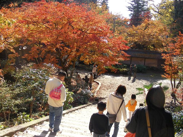 2008華厳寺 紅葉3
