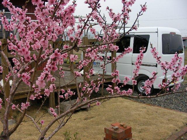 桃と作業車~1
