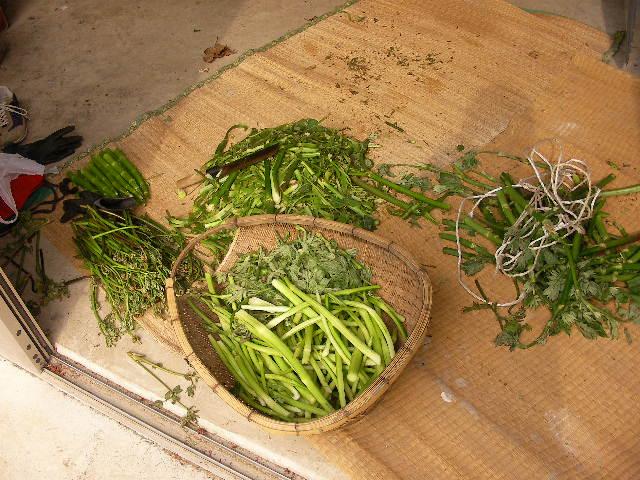 2009山菜取り2