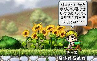 Maple1393.jpg