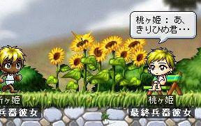 Maple1394.jpg