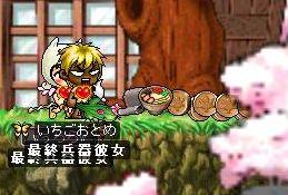 Maple2291.jpg