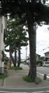 東海道、天竜川あたり