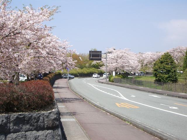 出先で撮った桜