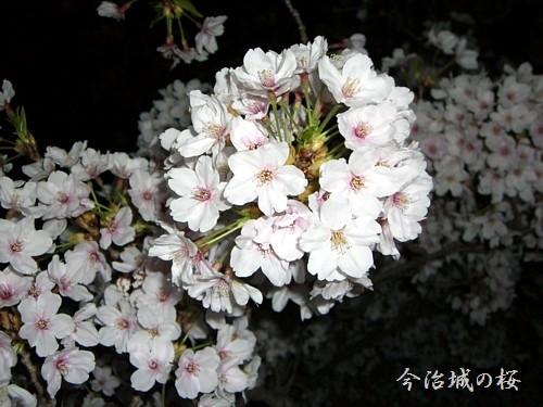 今治城の夜桜