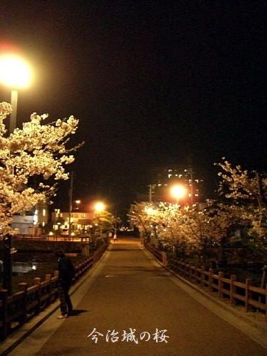 桜並木を上ります