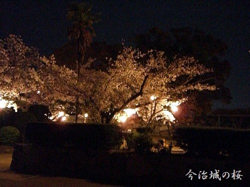 ライトアップされた桜が綺麗